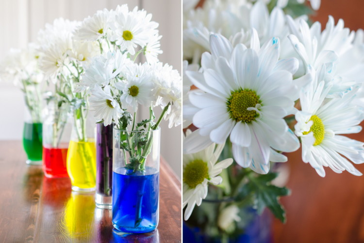 "Use food coloring and white flowers for a fun centerpiece and springtime ""science"" experiment."