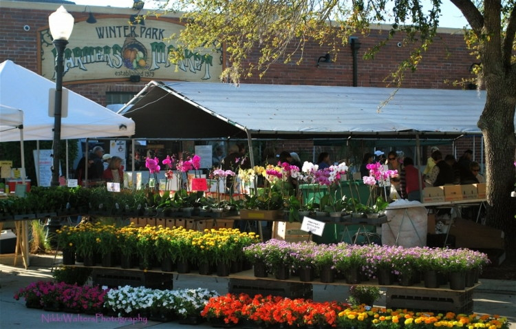 Free Things to Do in Orlando: Winter Park Farmers Market